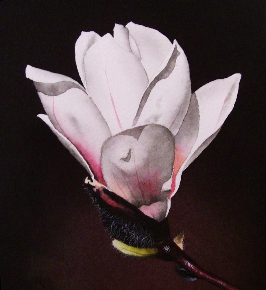 """White Magnolia with Pink Accents"" original fine art by Jacqueline Gnott, whs"