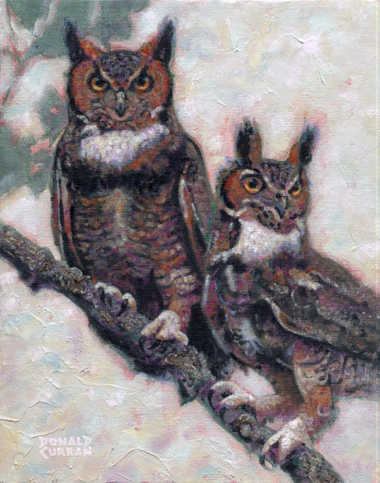 """""""Wise Old Owls"""" original fine art by Donald Curran"""