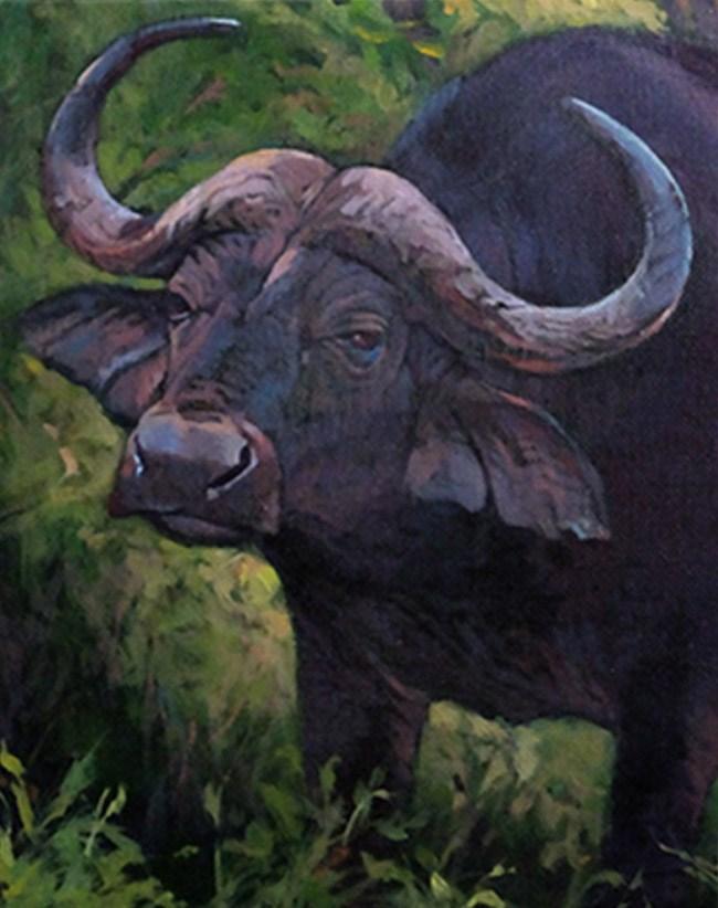 """Last Warning- Cape Buffalo"" original fine art by Shawn Shea"