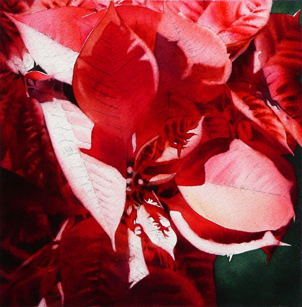 """Red Poinsettia - WIP"" original fine art by Arena Shawn"