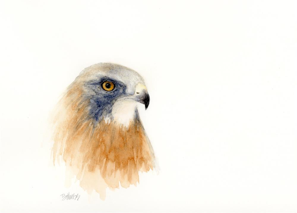 """Swainsons Hawk Study I"" original fine art by Susanne Billings"