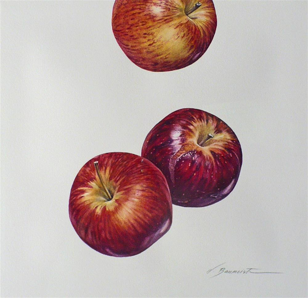 """Botanical: Apples"" original fine art by Nicoletta Baumeister"