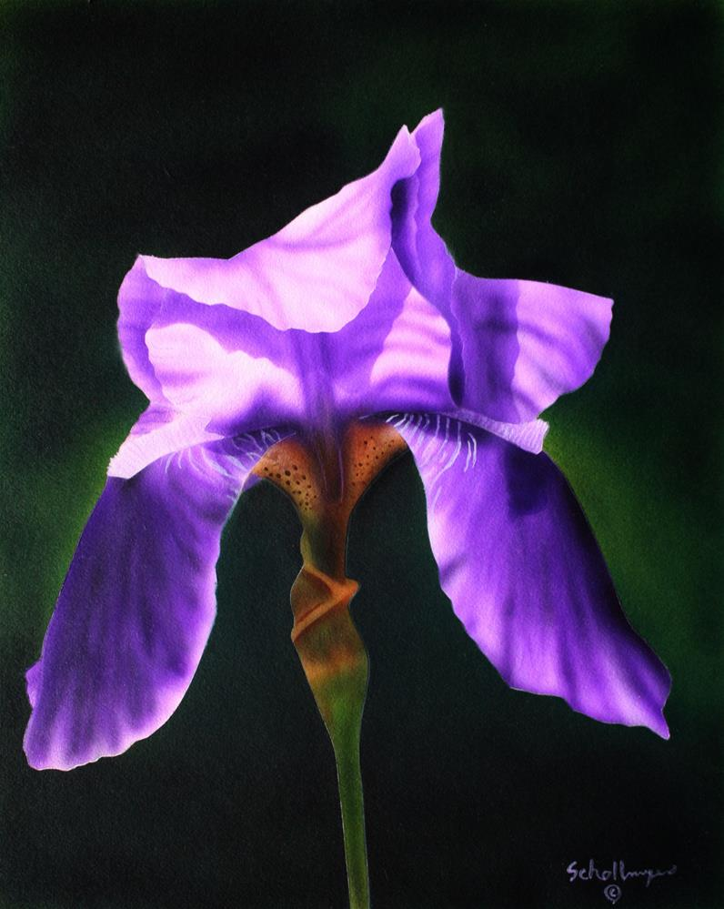 """Purple Perennial"" original fine art by Fred Schollmeyer"