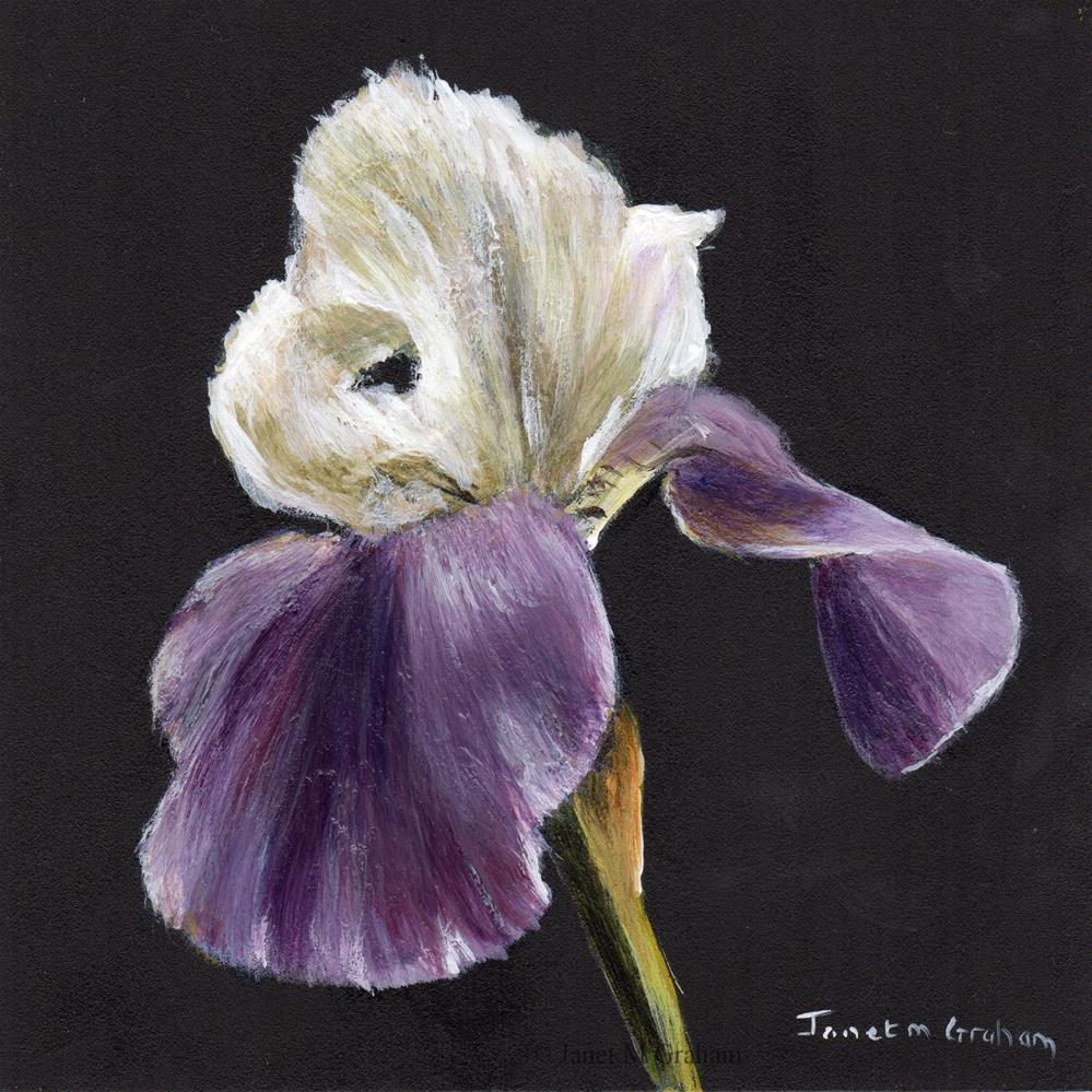 """Iris No 2"" original fine art by Janet Graham"