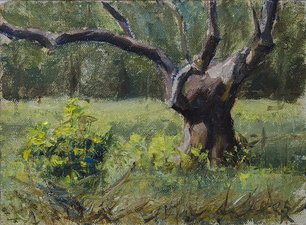 """Old Tree Study Spring 2016"" original fine art by Rachel Steely"