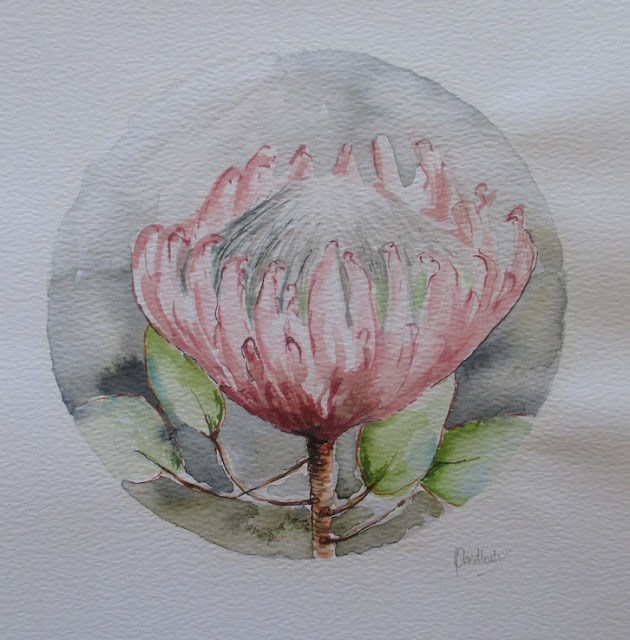 """Daily painting #738 Protea on paper"" original fine art by Heidi Shedlock"