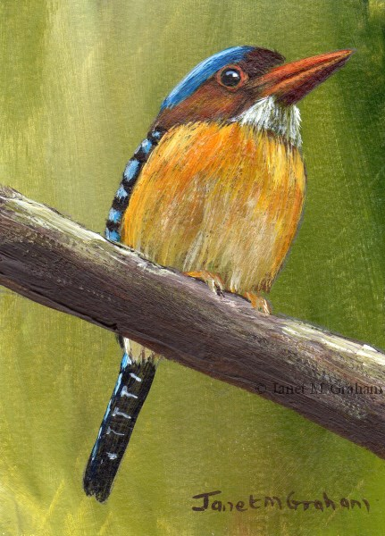 """Banded Kingfisher ACEO"" original fine art by Janet Graham"