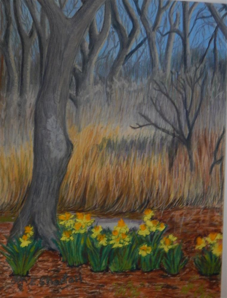 """""""Spring is Late! (Except for the daffodils)"""" original fine art by Elaine Shortall"""