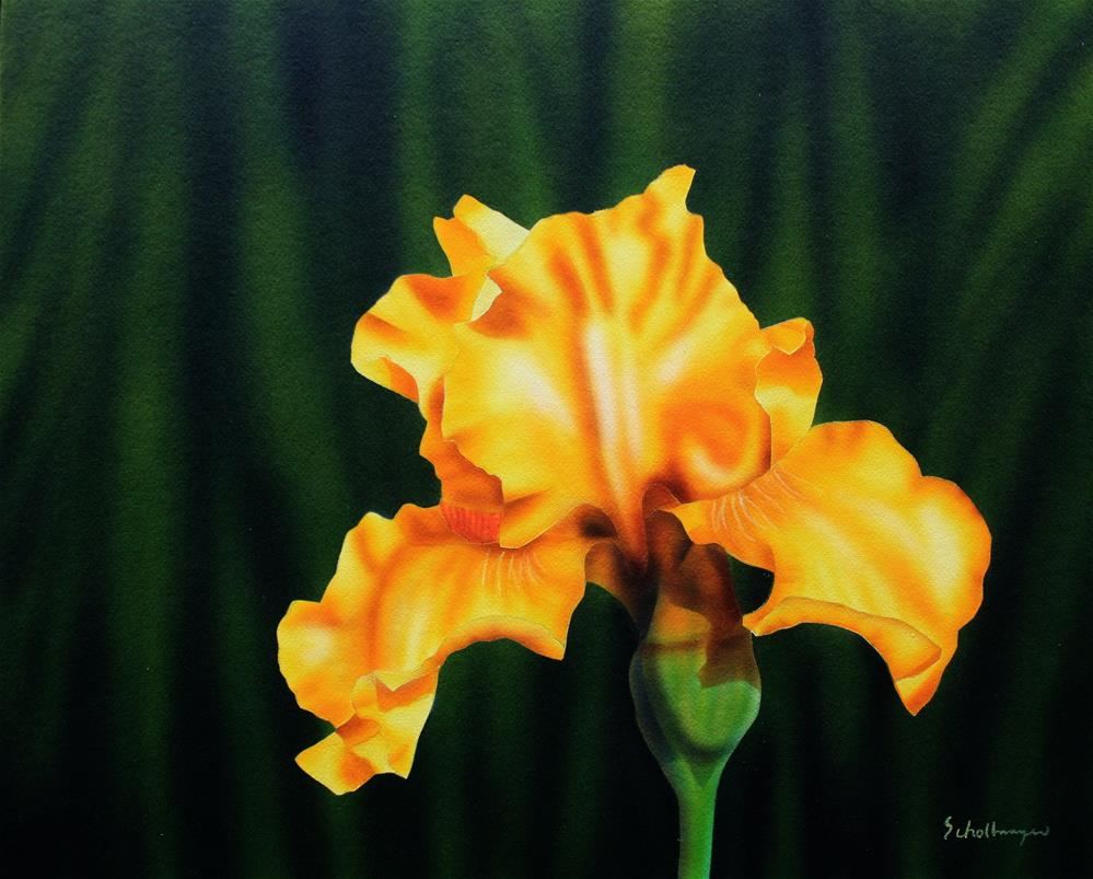 """Lemon Iris"" original fine art by Fred Schollmeyer"