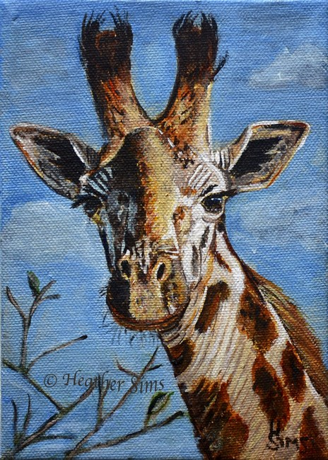 """Giraffe"" original fine art by Heather Sims"