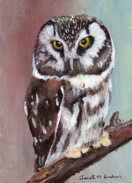 """Boreal Owl ACEO"" original fine art by Janet Graham"