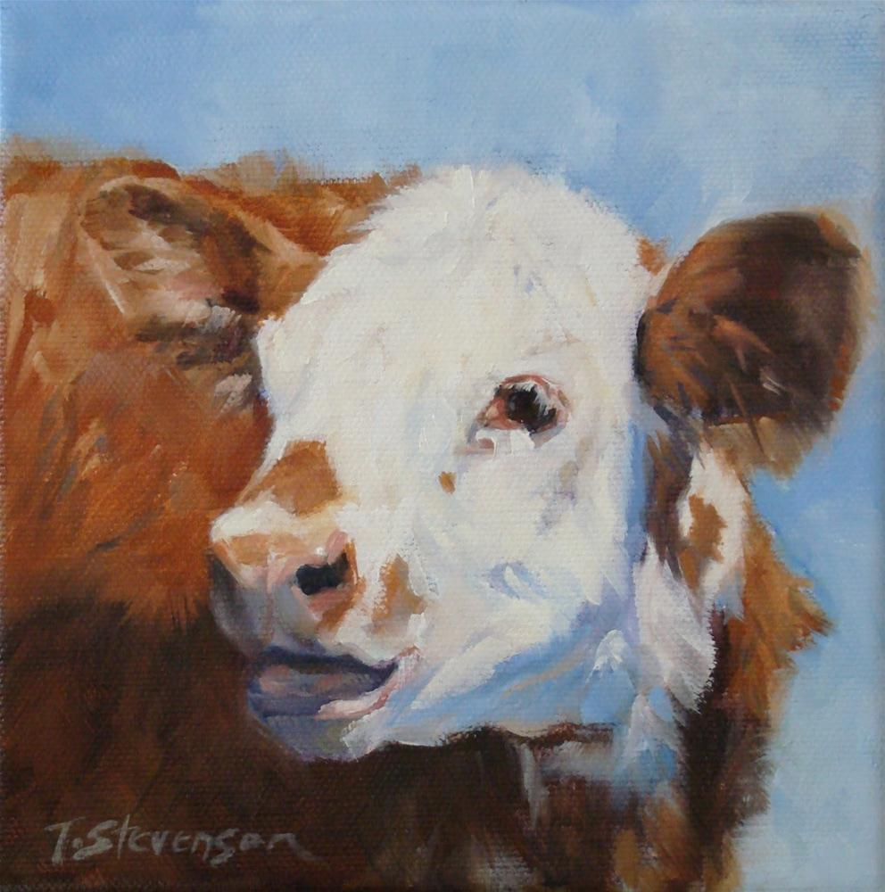 """Brockle-Face Calf"" original fine art by Trish Stevenson"