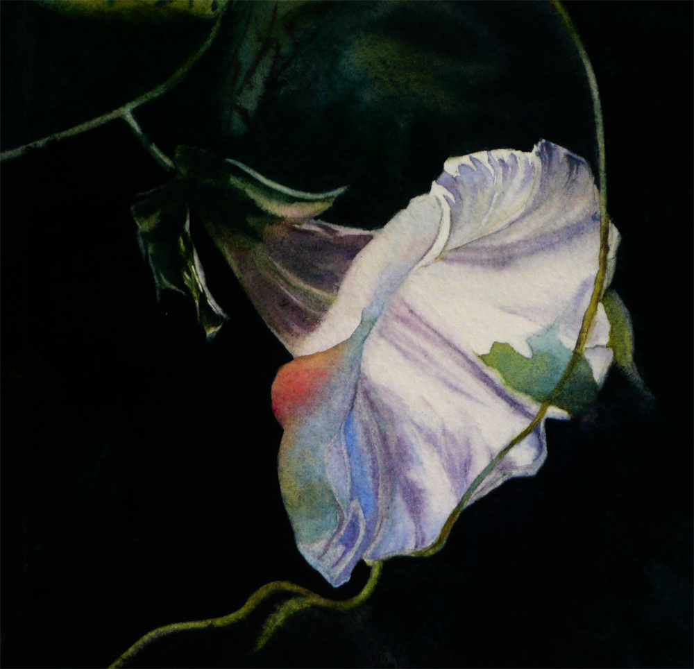 """Morning Glory"" original fine art by Arena Shawn"