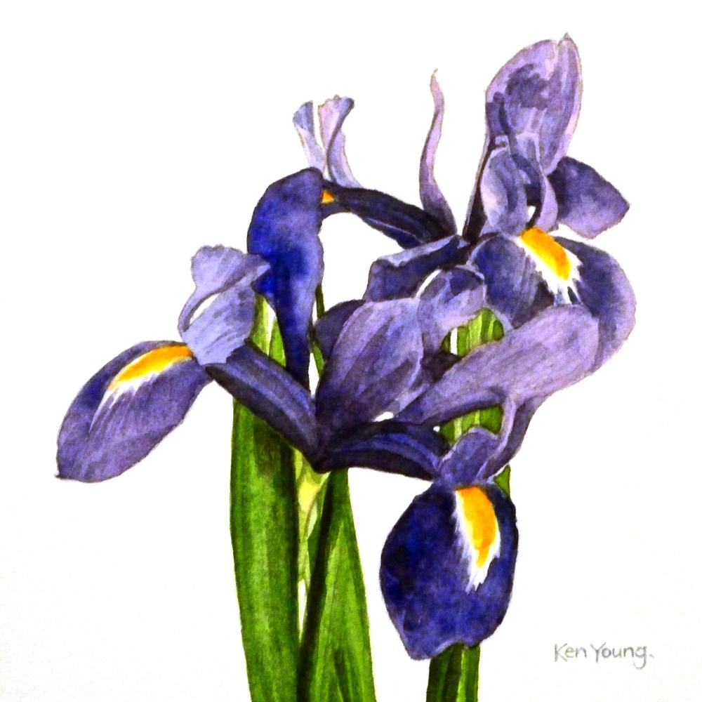 """Tangled Irises"" original fine art by Ken Young"