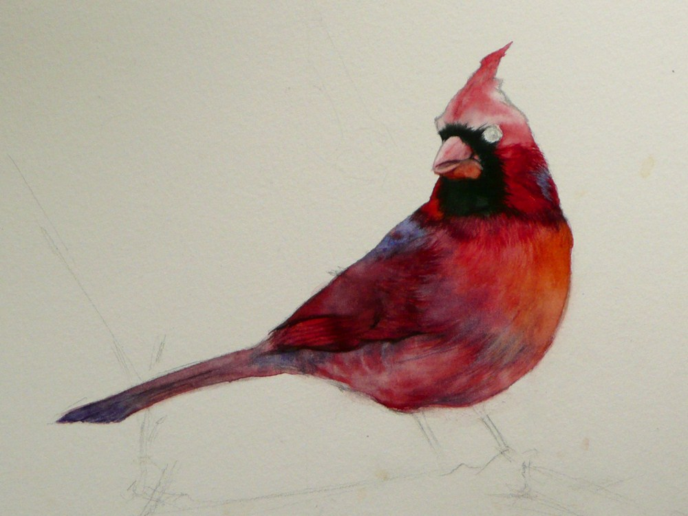 """Cardinal (My First Animal Painting!) - WIP"" original fine art by Arena Shawn"
