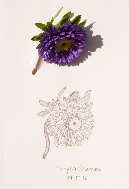 """Daily Sketch: Chrysanthemum"" original fine art by Debbie Lamey-Macdonald"