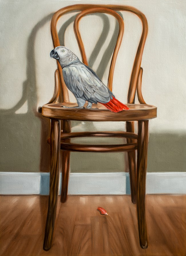 """African Grey Parrot and Chair"" original fine art by Lauren Pretorius"