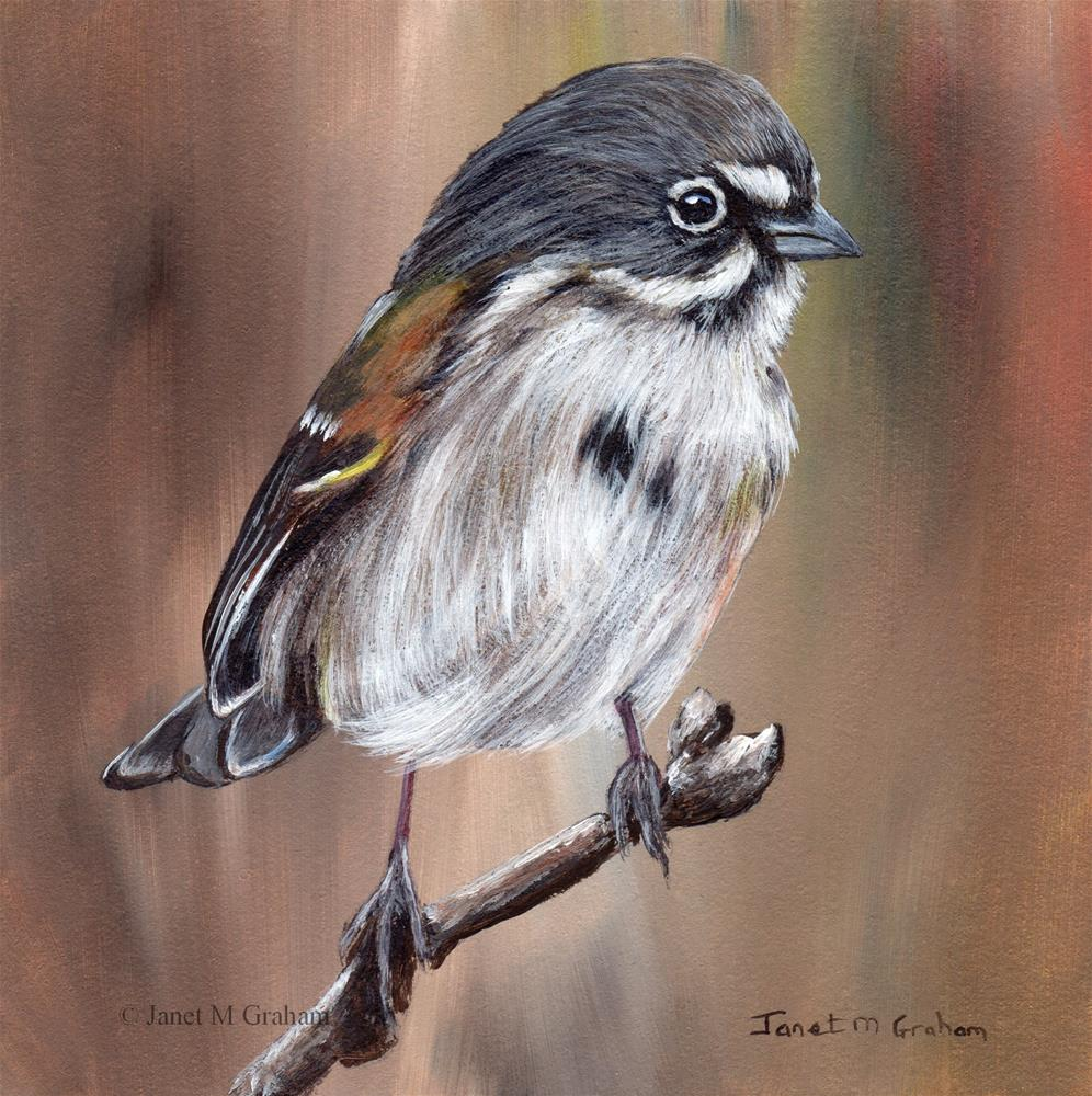 """Bell's Sparrow"" original fine art by Janet Graham"