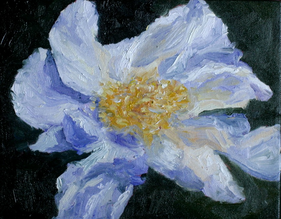 """White Poppy"" original fine art by Kristen Dukat"