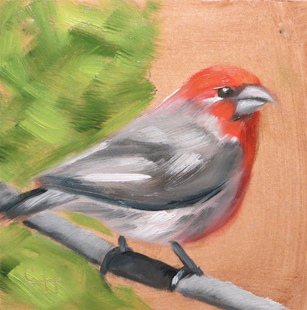 """House Finch"" original fine art by Claire Henning"