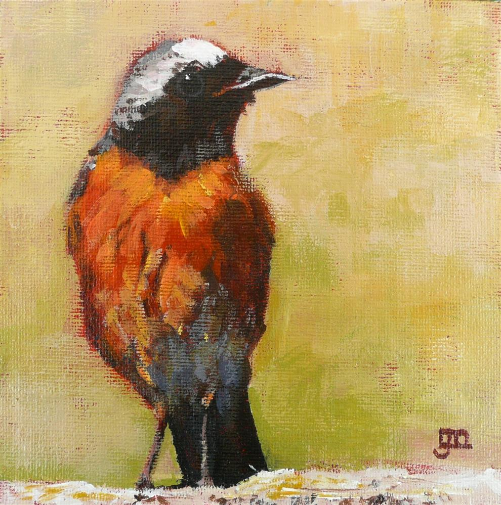 """Robin"" original fine art by Leanne Owen"