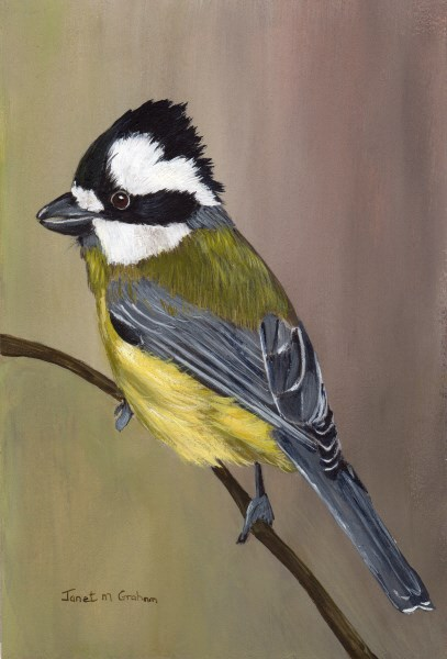 """Crested Shrike Tit"" original fine art by Janet Graham"