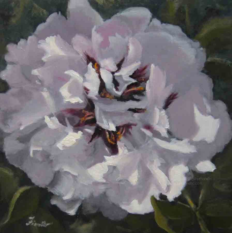 """Peony Passion"" original fine art by Pat Fiorello"