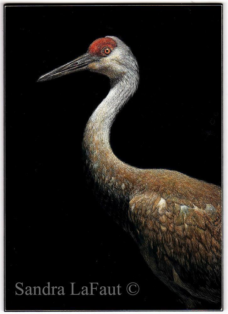 """Sandhill Crane"" original fine art by Sandra LaFaut"