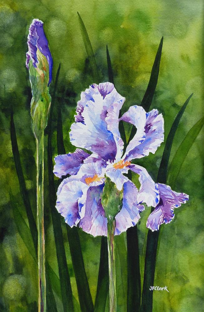 """Blue Iris"" original fine art by Judith Freeman Clark"