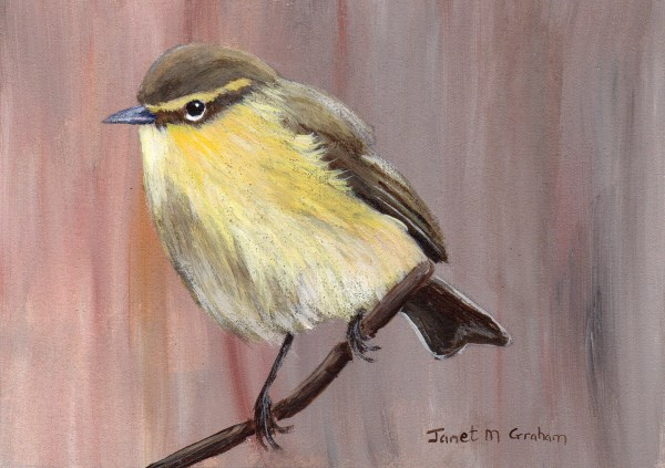 """Common Chiffchaff ACEO"" original fine art by Janet Graham"