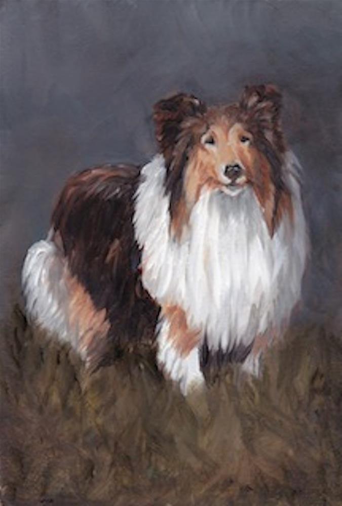 """Shetland Sheepdog"" original fine art by Charlotte Yealey"
