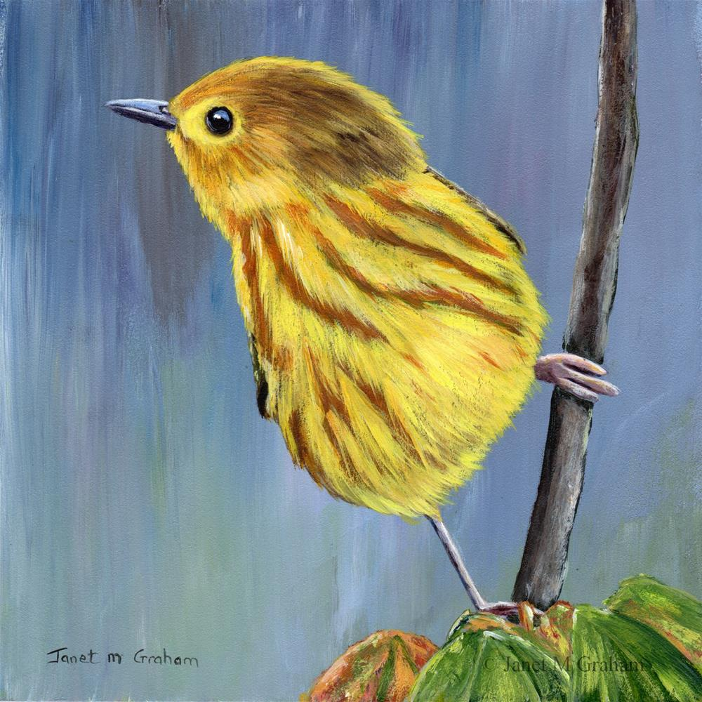 """Yellow Warbler 2"" original fine art by Janet Graham"