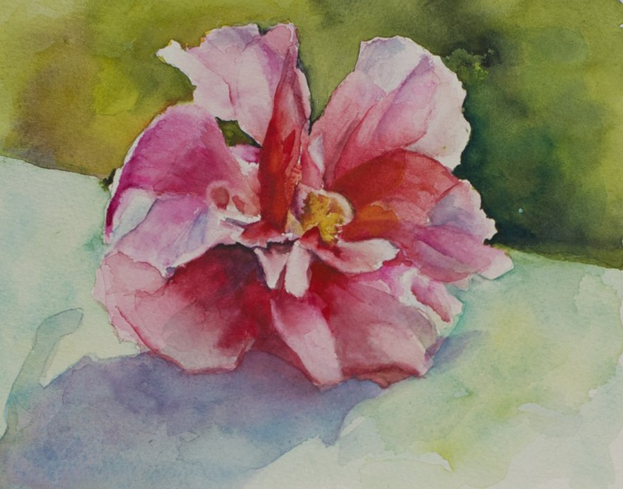 """Sunlit Hibiscus #1"" original fine art by Sue Churchgrant"