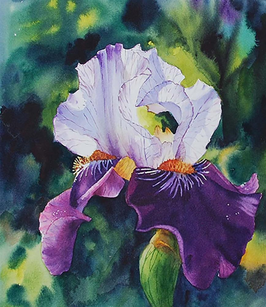 """Iris"" original fine art by Mary Anderson"