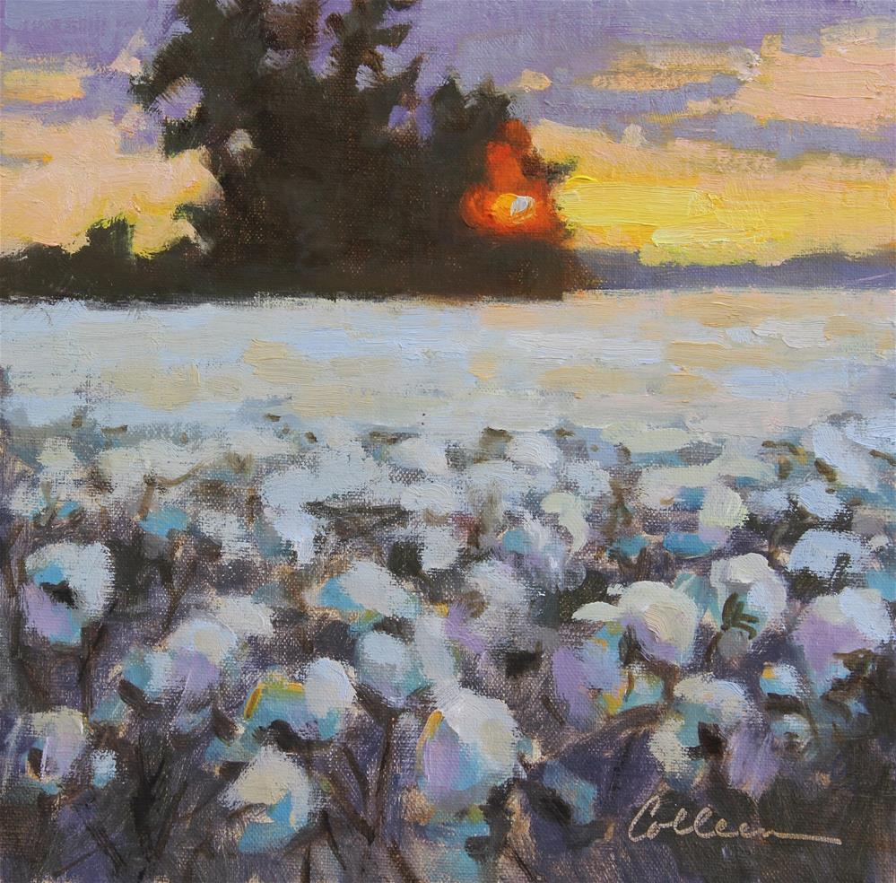 """Last Light on Cotton"" original fine art by Colleen Parker"
