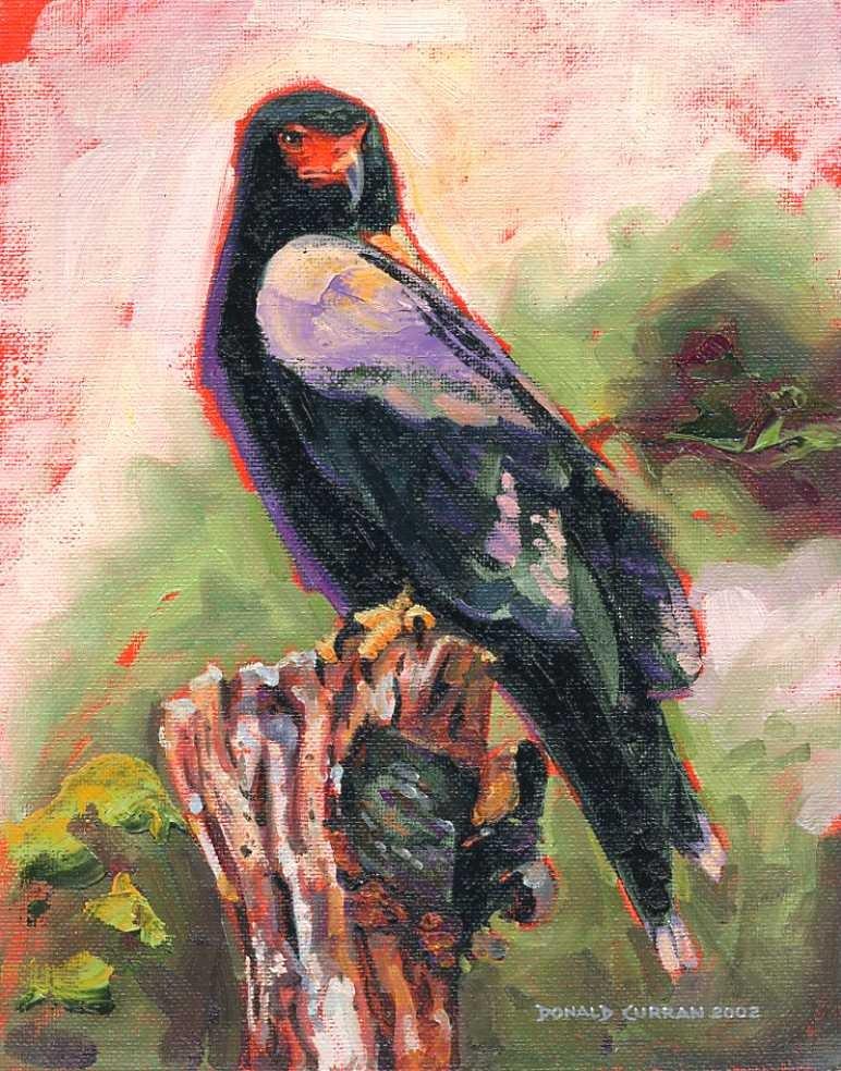 """Eagle"" original fine art by Donald Curran"