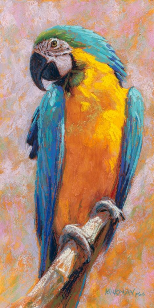 """Macaw"" original fine art by Rita Kirkman"