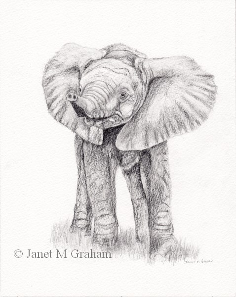 """Baby Elephant 2"" original fine art by Janet Graham"