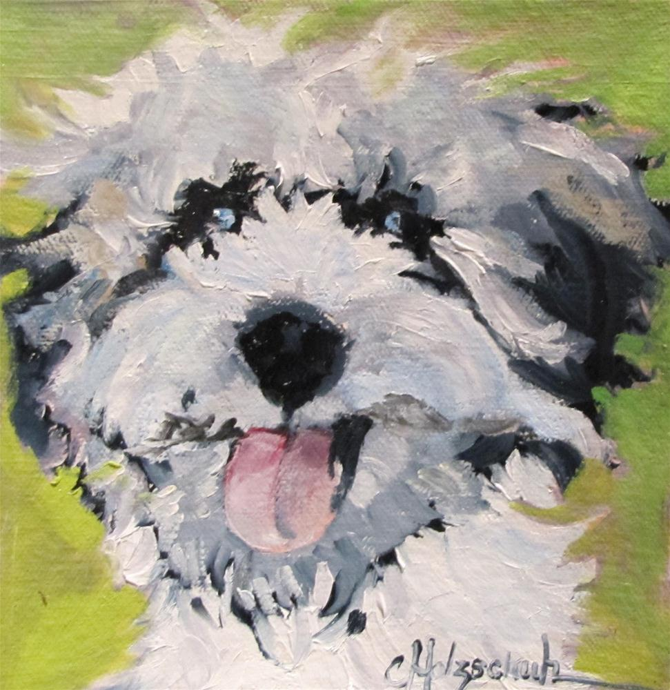 """Rufus  6x6 oil"" original fine art by Christine Holzschuh"