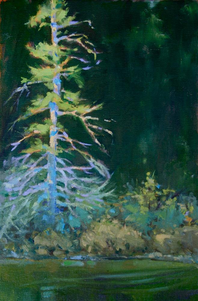 """Sunlit Pine"" original fine art by Jane Robertson"