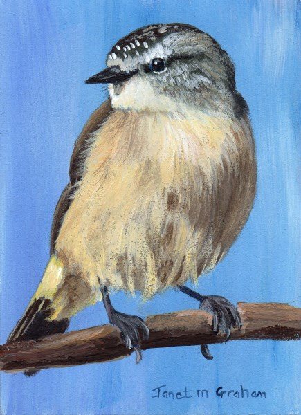 """Yellow Rumped Thornbill ACEO"" original fine art by Janet Graham"