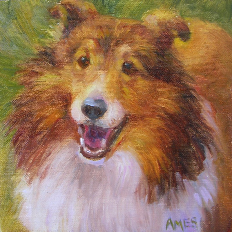 """Sheltie"" original fine art by Debra Ames"