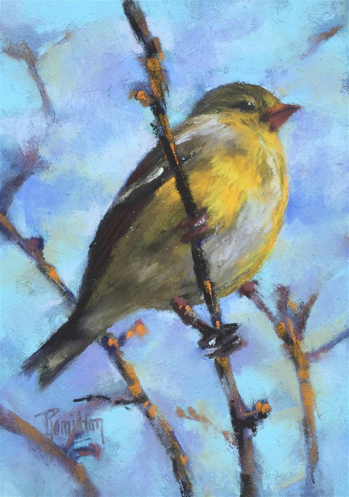 """Goldfinch"" original fine art by Pamela Hamilton"