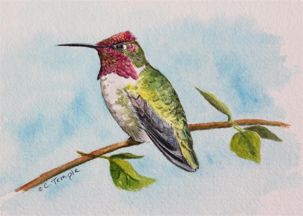 """Anna's Hummingbird"" original fine art by Catherine Temple"