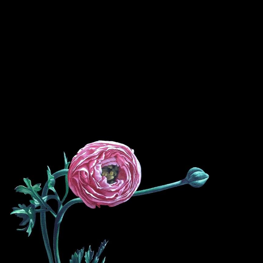 """""""Ranunculus I"""" original fine art by Jelaine Faunce"""