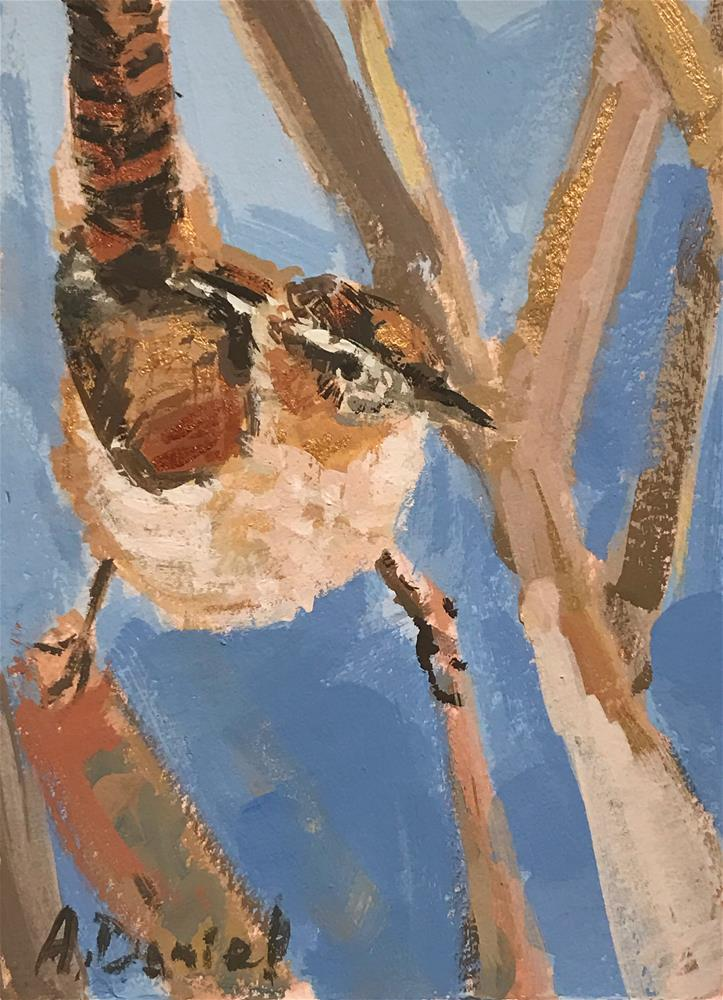 """Marsh Wren #4"" original fine art by Andrew Daniel"
