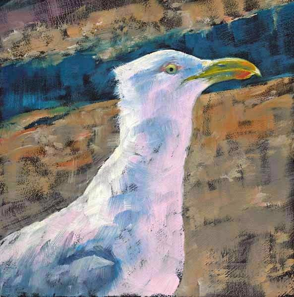 """Schoodic Seagull"" original fine art by Brenda Ferguson"