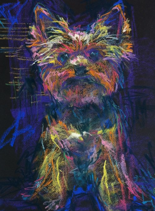 """PURPLE YORKIE - 12 x 9 pet pastel sketch by Susan Roden"" original fine art by Susan Roden"