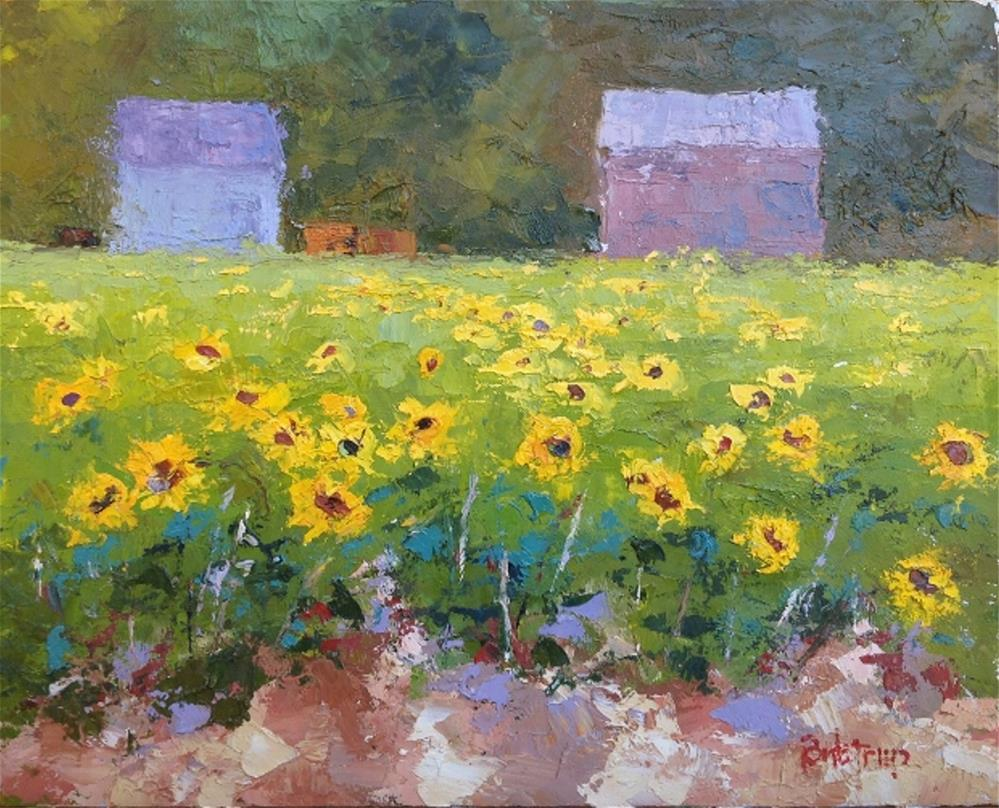 """Mangini Farm - Sunflowers"" original fine art by Mark Bidstrup"