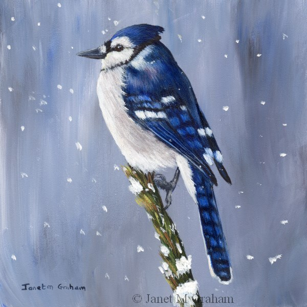 """Winter Blue Jay"" original fine art by Janet Graham"